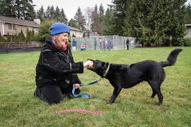Volunteers Build Dog Park For Homeless Women S Pets Kirkland Reporter
