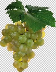 Shiraz Cabernet Sauvignon Sauvignon blanc Wine Grape, grape PNG clipart |  free cliparts | UIHere