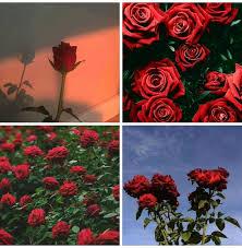 ورود طبيعية Art Painting Rose