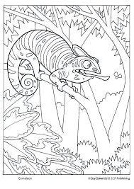 Cameleon Coloring Kleurplaten Kleurboek Kameleon