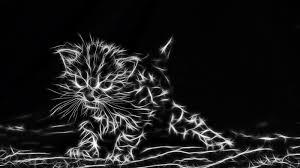 1600x900 خلفية القط خلفيات الصور مجانا 795846