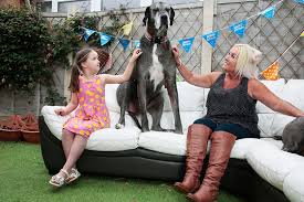 World's Tallest Dog Now the Oldest Great Dane Too | PEOPLE.com