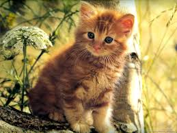 wallpaper kittens posted by samantha