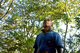 A Lifetime Of Planting Trees On A Remote River Island: Meet India's Forest  Man : Parallels : NPR