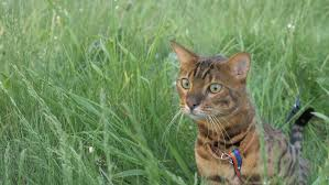 Electric Fences And Cat Safety