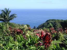 maui s botanical gardens show hawaii s