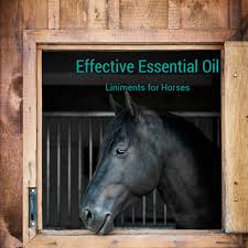 equine liniment with essential oils