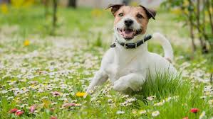 Does your pet have spring allergies? | WEYI