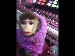beautiful monkey with makeup you