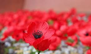 remembrance day does have remembrance day world