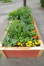 urban raised bed vegetable garden with