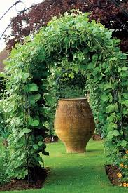 arbors trellises and the edible