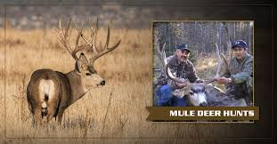New Mexico Elk Hunting Outfitters Guided Elk Hunts In New Mexico