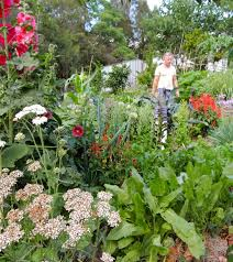 150 plants from my permaculture garden