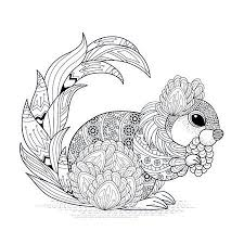 Coloring Book Pages Squirrel Stock Photos And Images 123rf