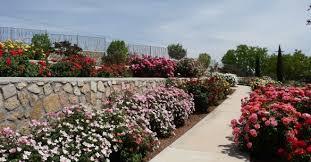 el paso munil rose garden