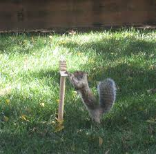 2007 Squirrel Obstacle Course