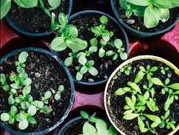 five tips for new gardeners from a