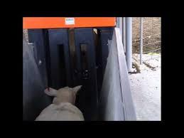 Gallagher Smart Fence Break Feeding Fence Installation Youtube