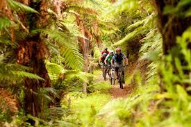 AC63-Kawakawa-Bay-Track-Rotorua-Tourism-New-Zealand | eMotel ...