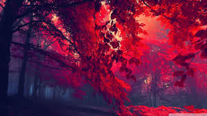 red 1080p wallpapers top free red