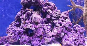 Live Rock For Saltwater Aquariums The Ultimate Guide Arc Reef