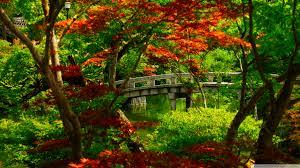 kyoto japanese garden high resolution