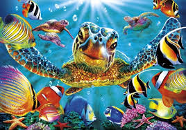 hd 3d sea turtle other s