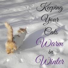 outdoor cats warm and safe in winter