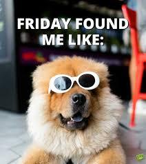 happy friday party s dog