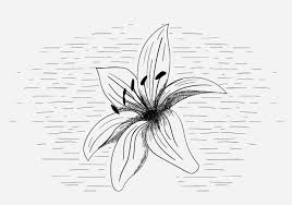 Gratis Vector Lily Flower Illustratie Download Free Vectors