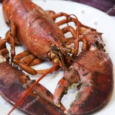 cooked obster on plate Halls Harbour ...