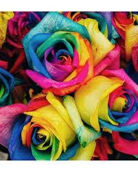 dozen rainbow roses in baltimore md