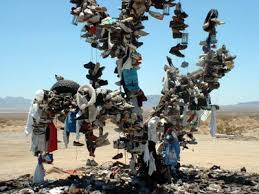 Life Cycle Of A Shoe Tree