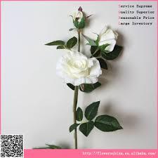 quotes bunga mawar bahasa inggris mawar ku