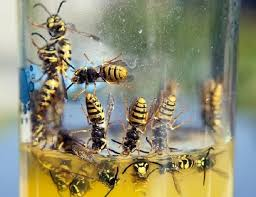 get rid of wasps keep them away