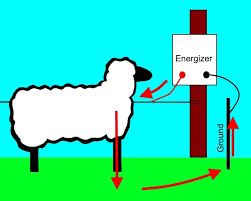 How Does An Electric Fence Work Practical Primate