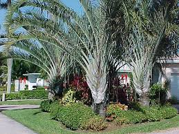 palm tree landscaping ideas landscaping