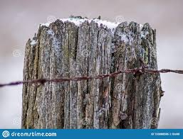Barb Wire Attached To Fence Post Stock Photo Image Of Barb Southern 133888586