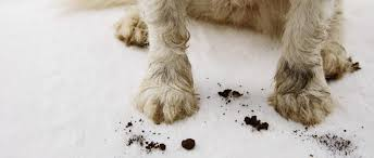 How To Stop A Dog From Digging Under A Fence 5 Diy Solutions Hif Healthy Lifestyle Blog