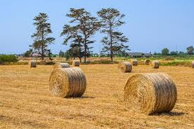 Hay Agriculture Straw - Free photo on Pixabay