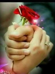 beautiful rose for watsapp dp