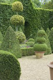 english boxwood garden