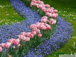 ideas for planting tulips to create