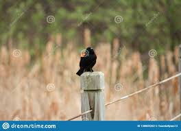 A Bird Standing On A Wire Fence Stock Photo Image Of Minnesota Bird 130805262