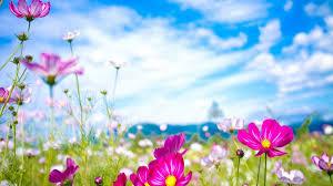 صور خلفيات بنات On Twitter خلفيات طبيعة روعة فيها زهور كثيرة