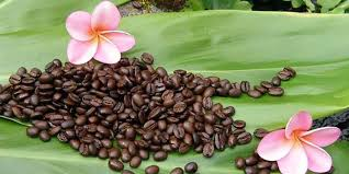 I Love Hawaii - Kona coffee is the market name for coffee ...