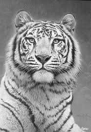 Tiger Cat Coloring Pages Colouring Adult Detailed Advanced