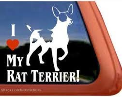 I Love My Rat Terrier Dc374hea High Quality Adhesive Vinyl Window Decal Sticker 5 Tall X 5 Wide Rat Terriers Terrier Rescue Terrier