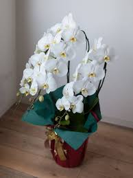 are orchids good gifts smart garden